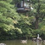 Behind Kyoto temple