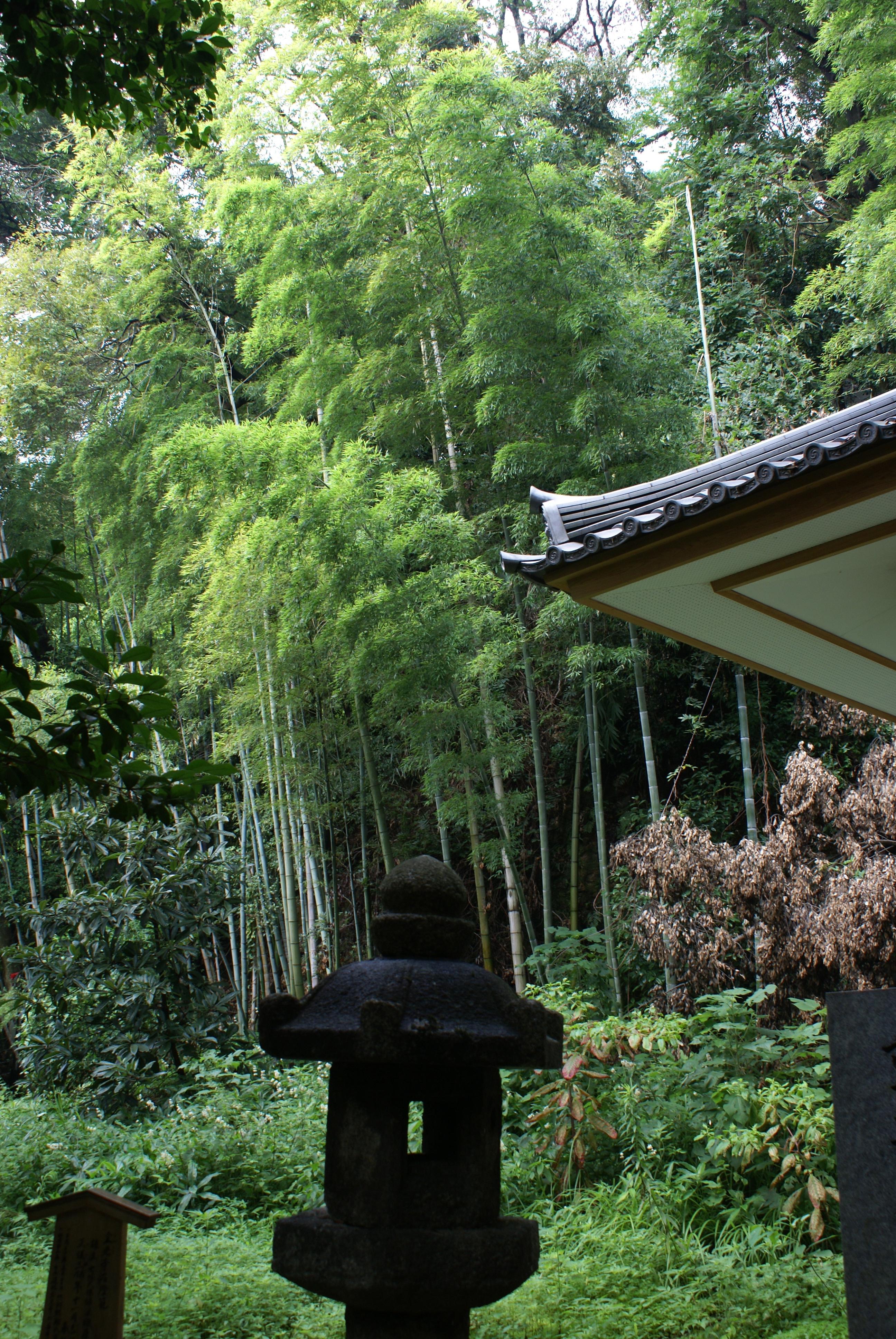 Bamboos behind Kyoto temples