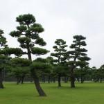 Emperor palace gardens