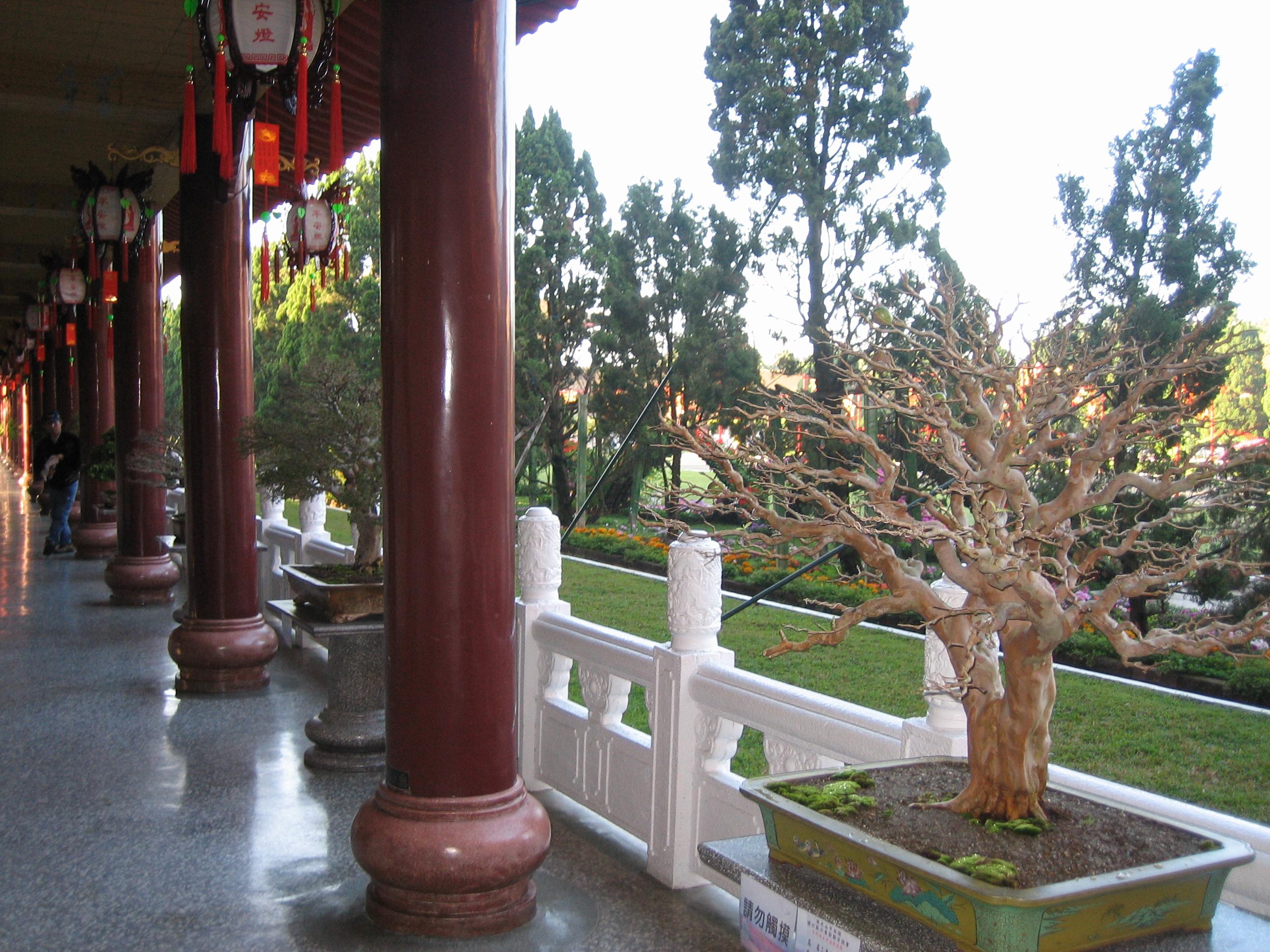 Bonzai in Fo Guang Shan
